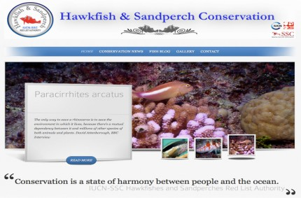 Hawkfish & Sandperch Conservation